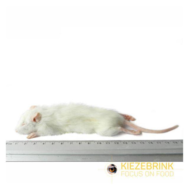 Kleine Weaner rat 25-60 gram -1 kg
