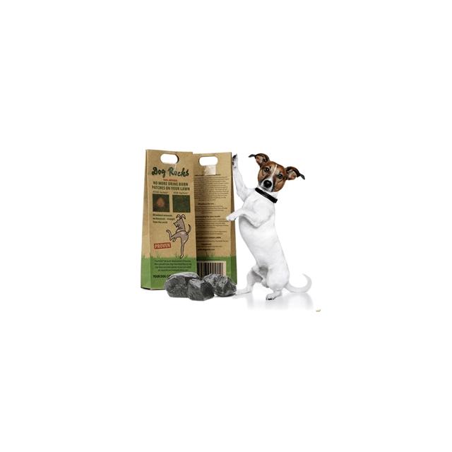 Dog Rocks - Tegen Geel Gazon